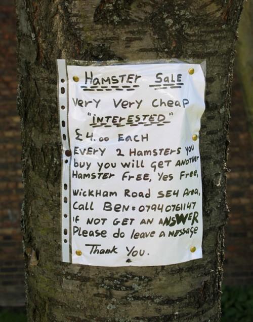 hamstersale